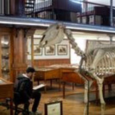 Man draws dinosaur skeleton in museum.